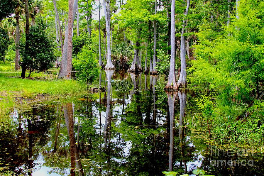 Peaceful Lake Photograph