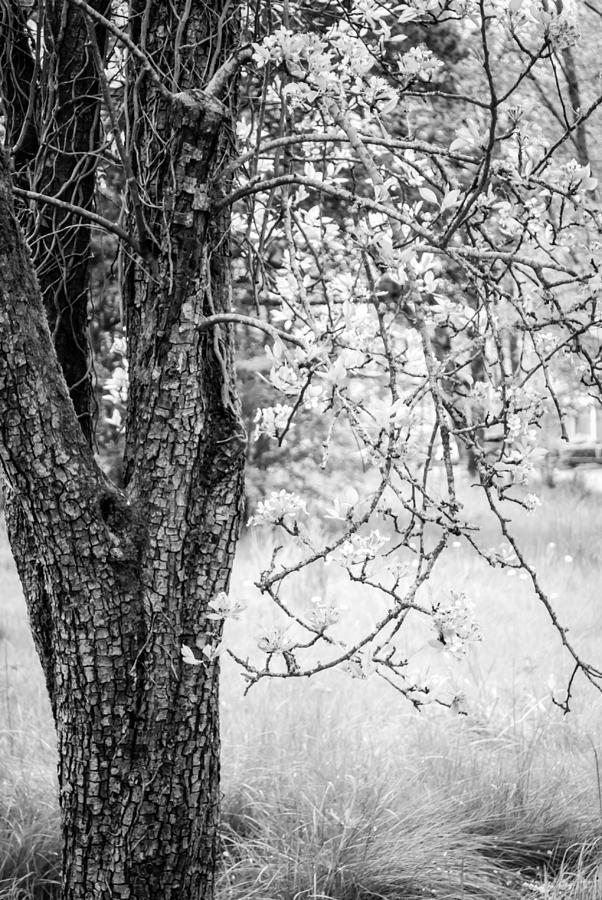 Peaceful Meadow Tree by Anna Burdette