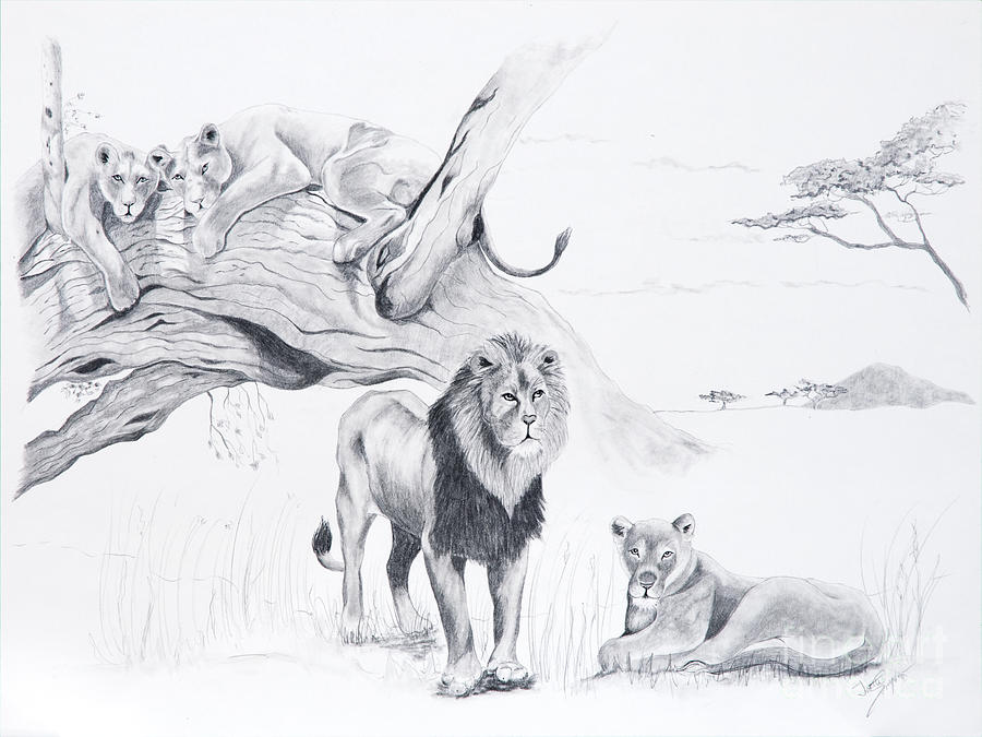 Lion Drawing - Peaceful Pride by Joette Snyder