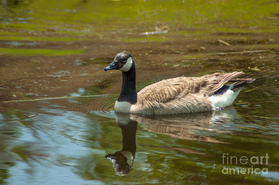 Peaceful Reflections Photograph