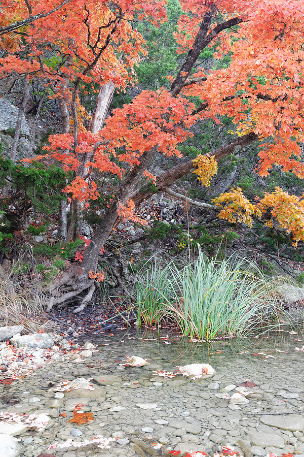 Lost Maples Photograph - Peaceful Retreat Lost Maples Texas Hill Country by Silvio Ligutti