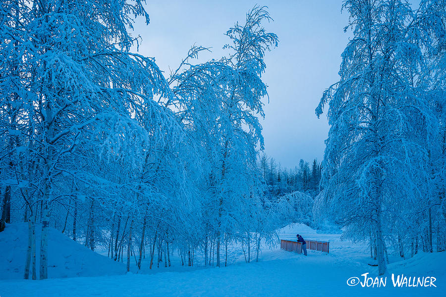 Alaska Photograph - Peaceful Winter by Joan Wallner