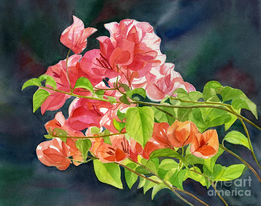 Bougainvillea Painting - Peach Colored Bougainvillea With Dark Background by Sharon Freeman