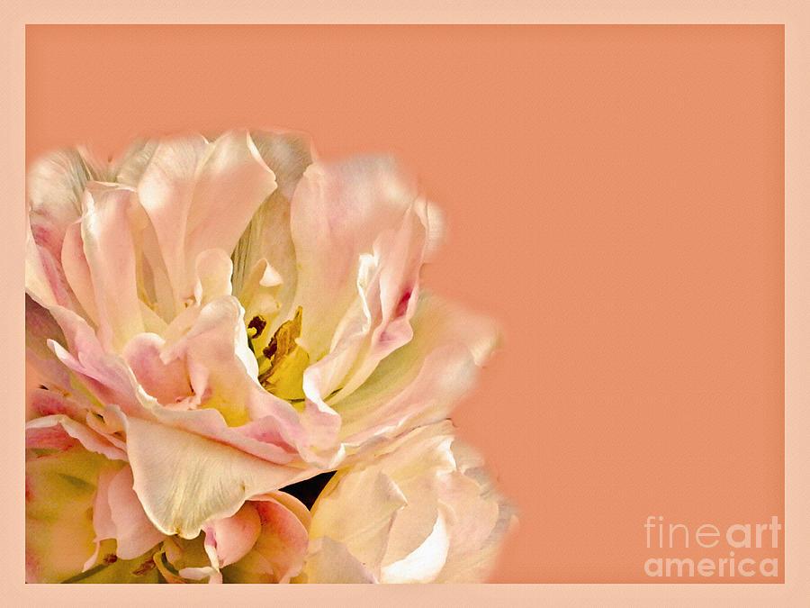 Flower Photograph - Peach Rose by Carol F Austin