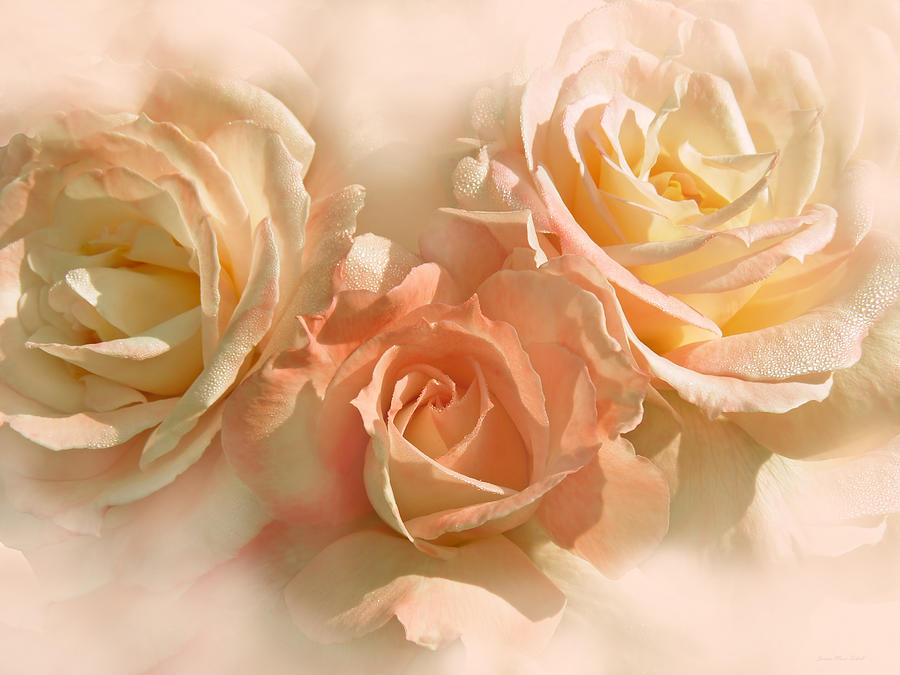 Rose Photograph - Peach Roses In The Mist by Jennie Marie Schell