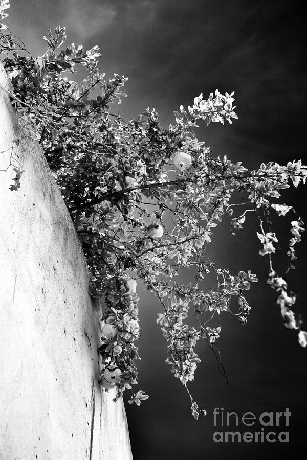 Peaches Photograph - Peaches In Lisbon by John Rizzuto