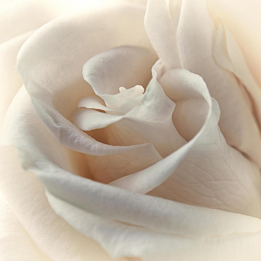 Floral Photograph - Peaches N Cream by Darlene Kwiatkowski