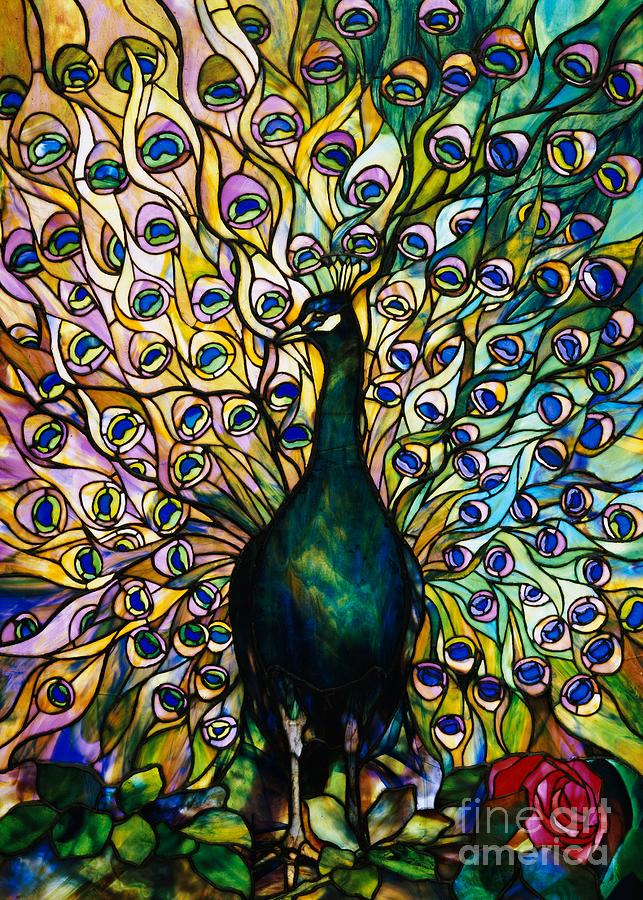 Peacock Photograph - Peacock by American School