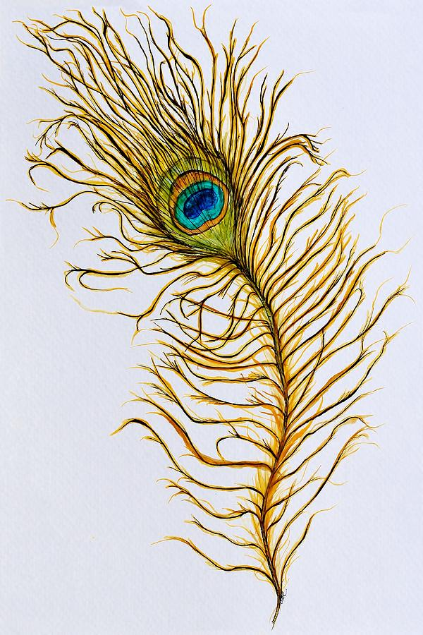 Peacock Feather by Anne Clark