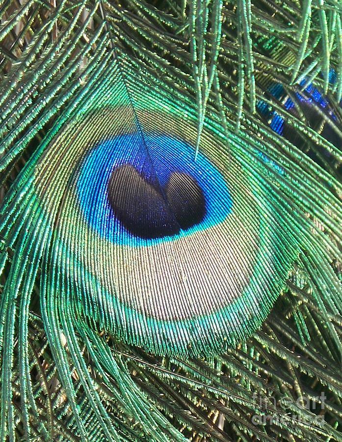 Peacock Feather Photograph - Peacock Feather by Eric  Schiabor