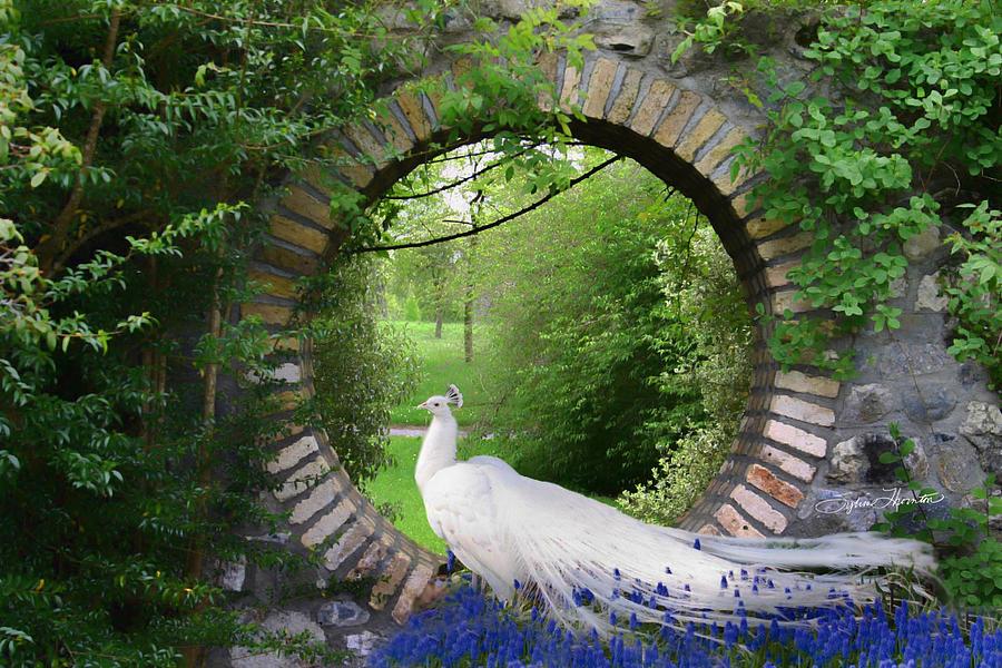 Peacock Garden Photograph By Sylvia Thornton