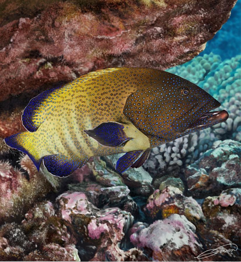 Fish Digital Art - Peacock Grouper by Owen Bell