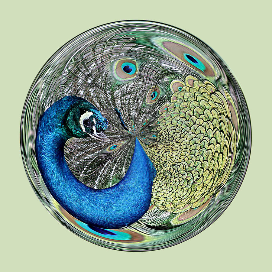 Peacock Photograph - Peacock Orb by Paulette Thomas