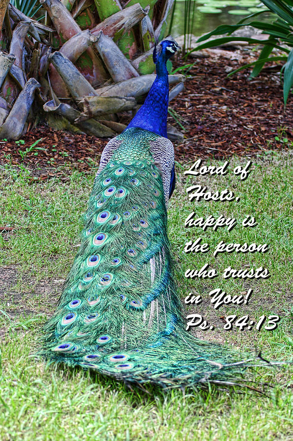 Scripture Photograph - Peacock Psalms 84v13 by Linda Phelps