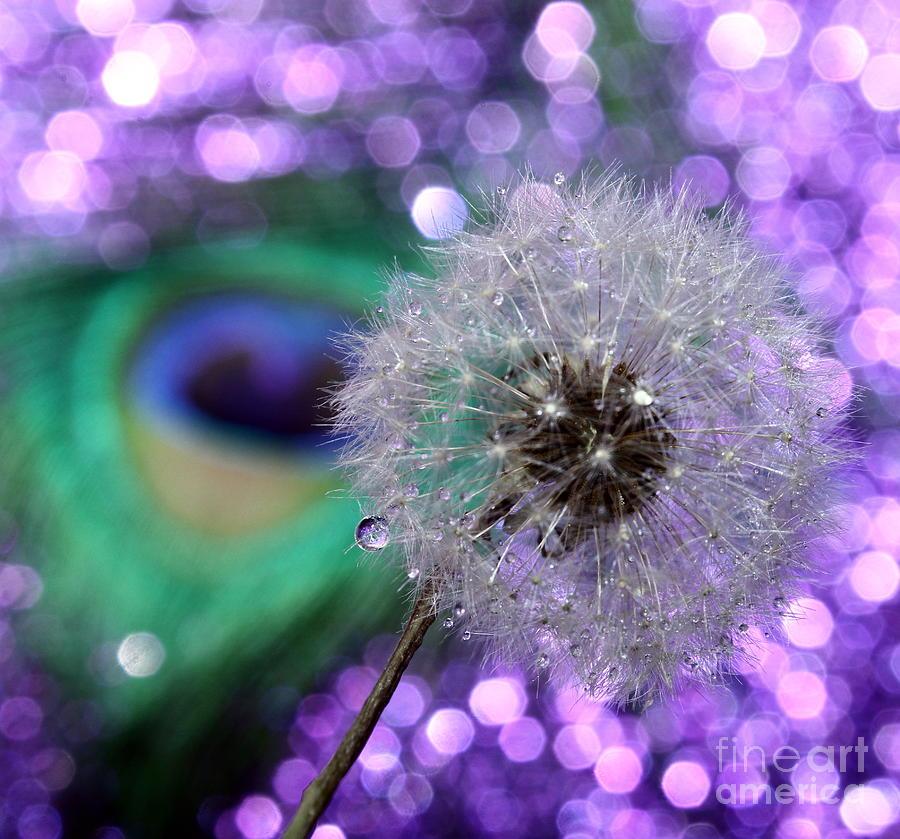 Dandelion Photograph - Peacock Wish by Krissy Katsimbras