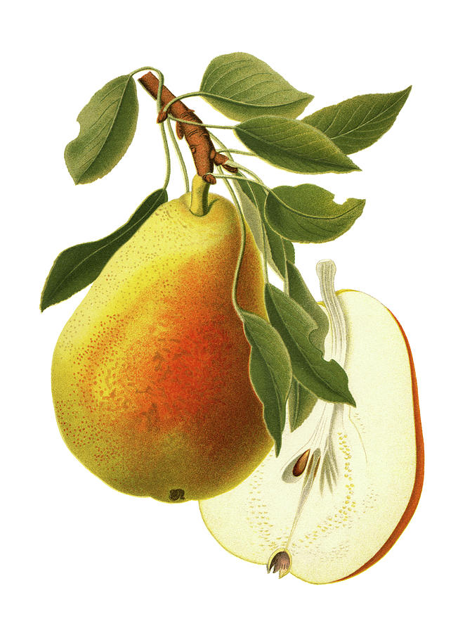 Pear Digital Art by Ivan-96
