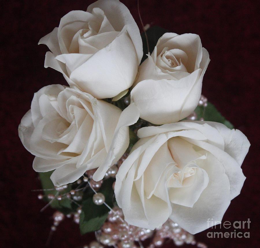Pearls And Roses Photograph by Nancy TeWinkel Lauren