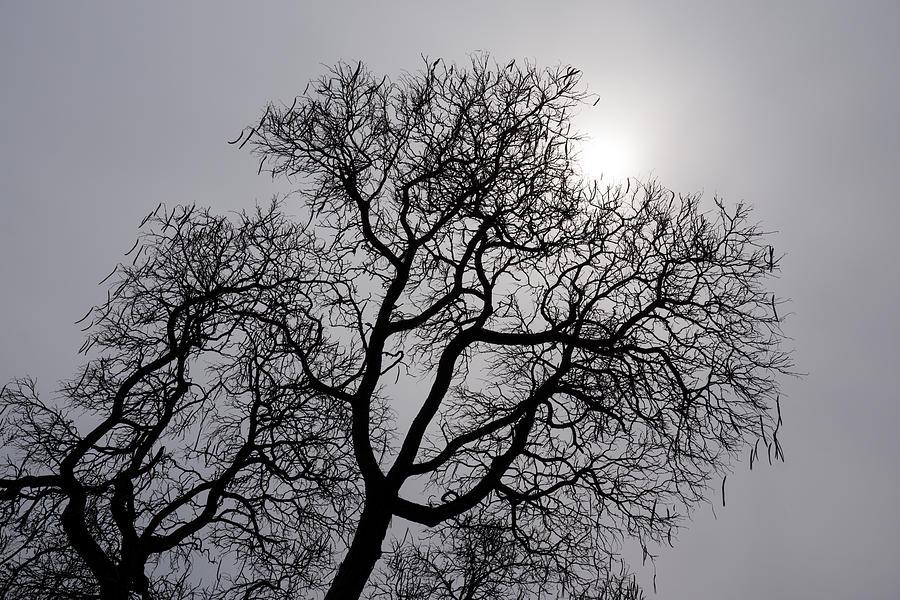 Silver Photograph - Pearly Silver Filigree On The Sky  by Georgia Mizuleva
