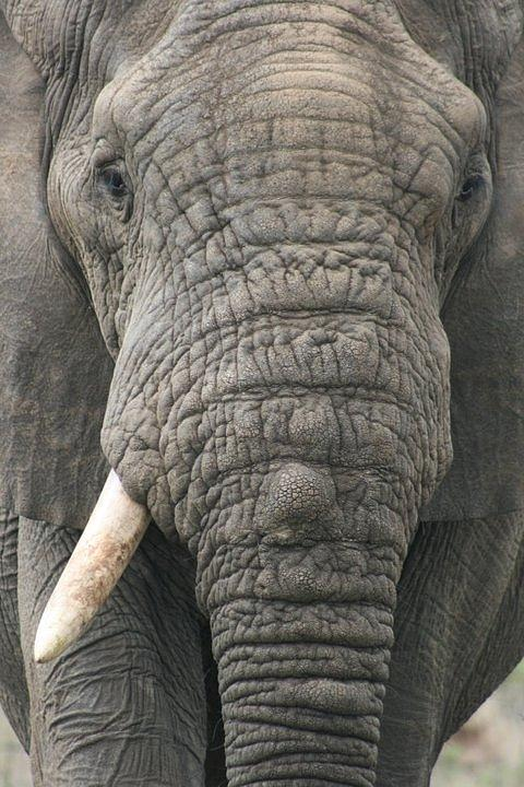 Elephant Photograph - Peace by Debbie Cundy