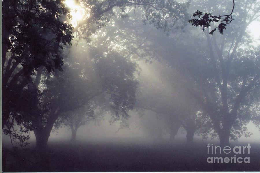 Pecan Photograph - Pecan Grove On A May Morning by Debbie Bailey