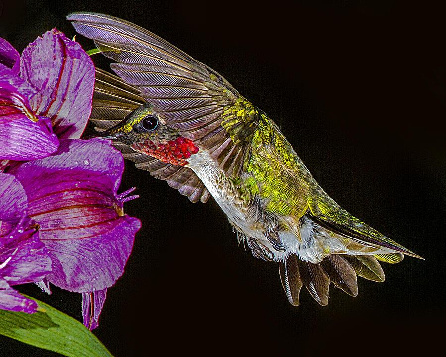 Bird Photograph - Look - No Hands by Janice Carter