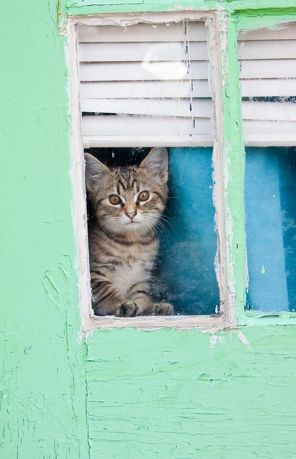 Kitty Photograph - Peek-a-boo by Jean Haynes