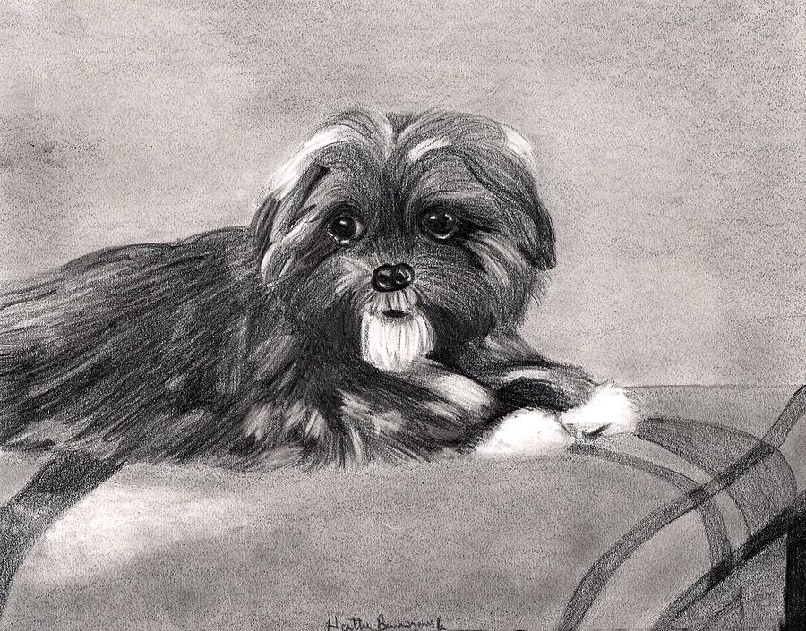 Peekapoo Dog Drawing - Peekapoo Dog by Olde Time  Mercantile