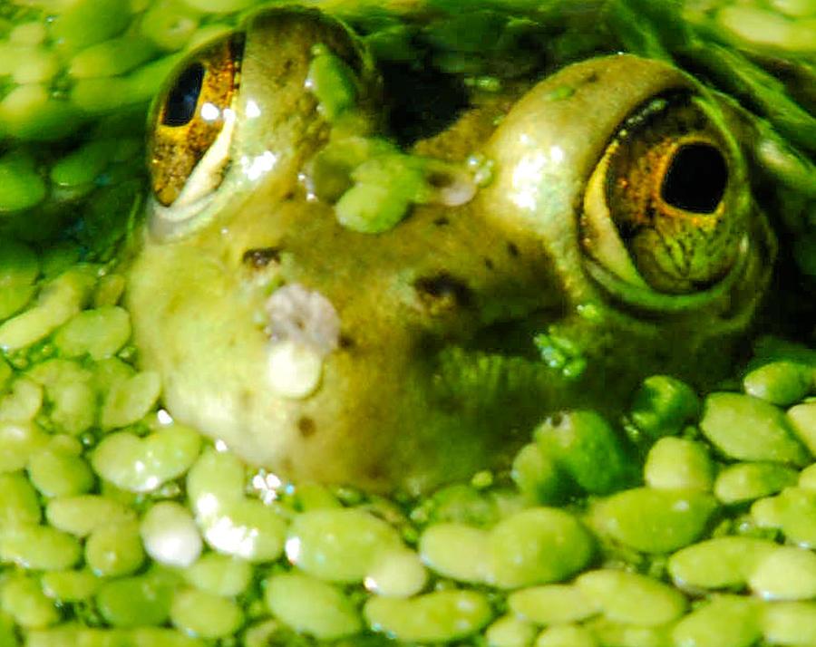 Green Algae Photograph - Peeping Through The Algae  by Optical Playground By MP Ray