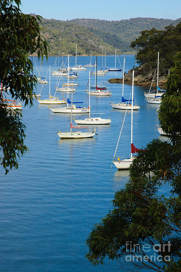 Quiet Photograph - Peeping Through The Trees - Yachts Moored In A Quiet River by David Hill