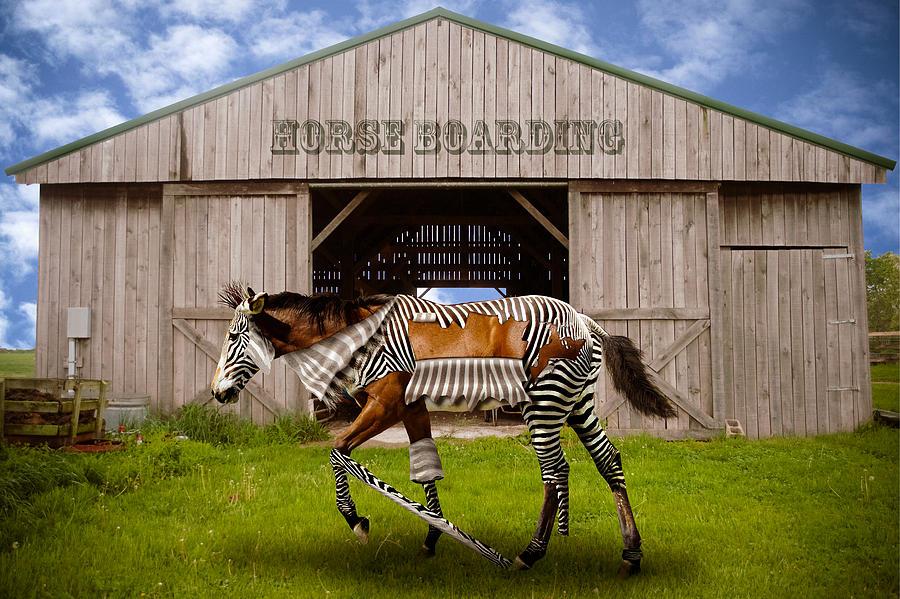 Horse Digital Art - Peer Pressure by Randy Turnbow