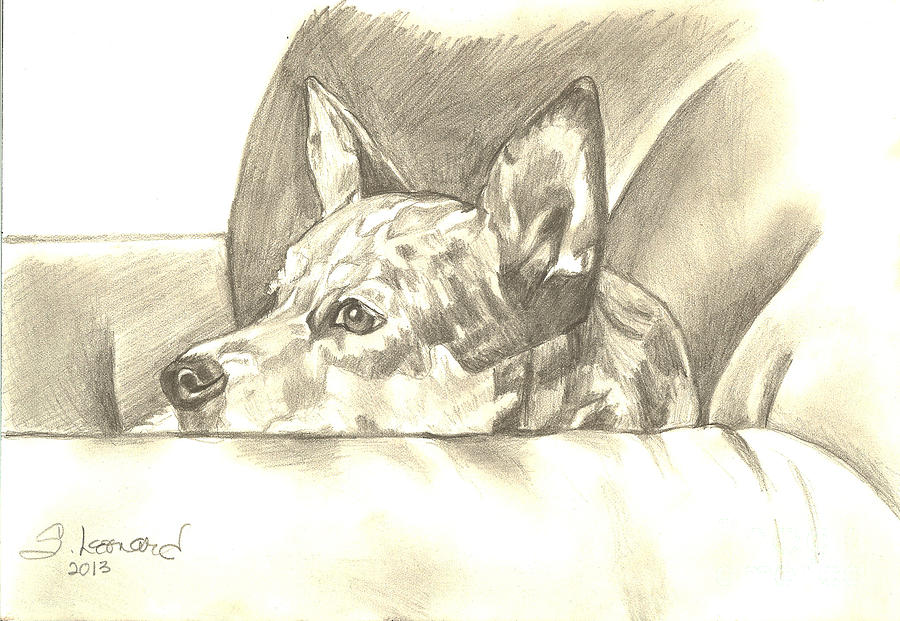 Australian Cattle Dog Drawing - Peggy Jean by Suzanne Leonard