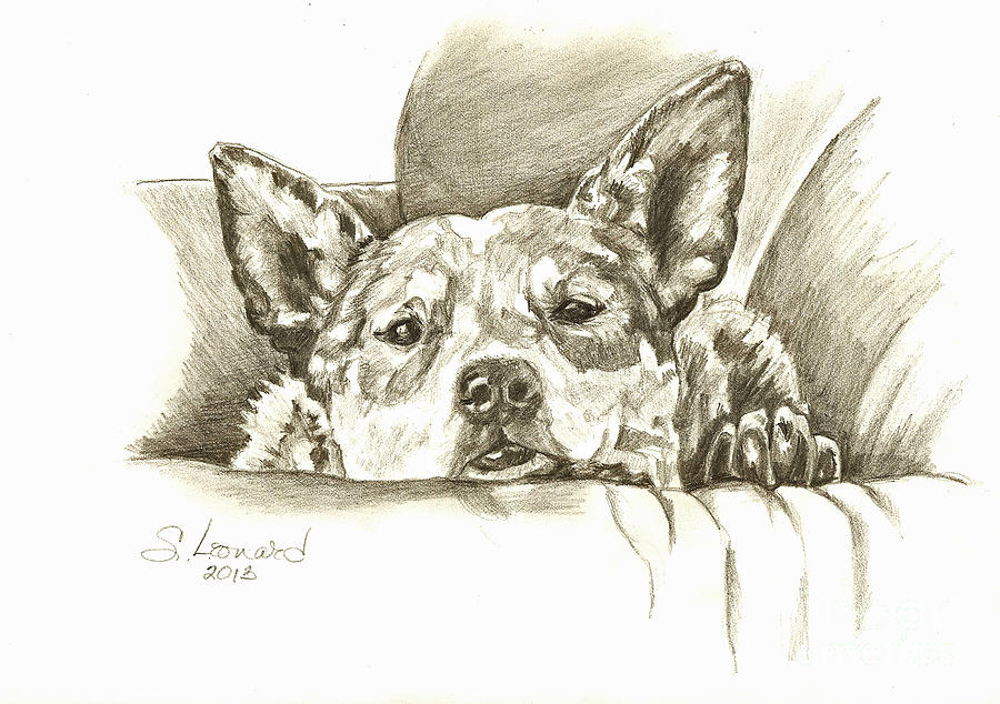 Australian Cattle Dog Drawing - Pegilicious by Suzanne Leonard