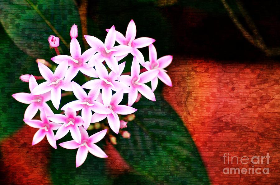 Photo Photograph - Pelargonium Graveolens II by Floyd Menezes