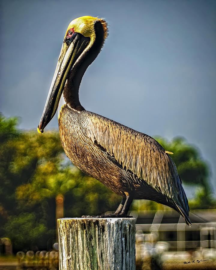 Pelican Brief Photograph