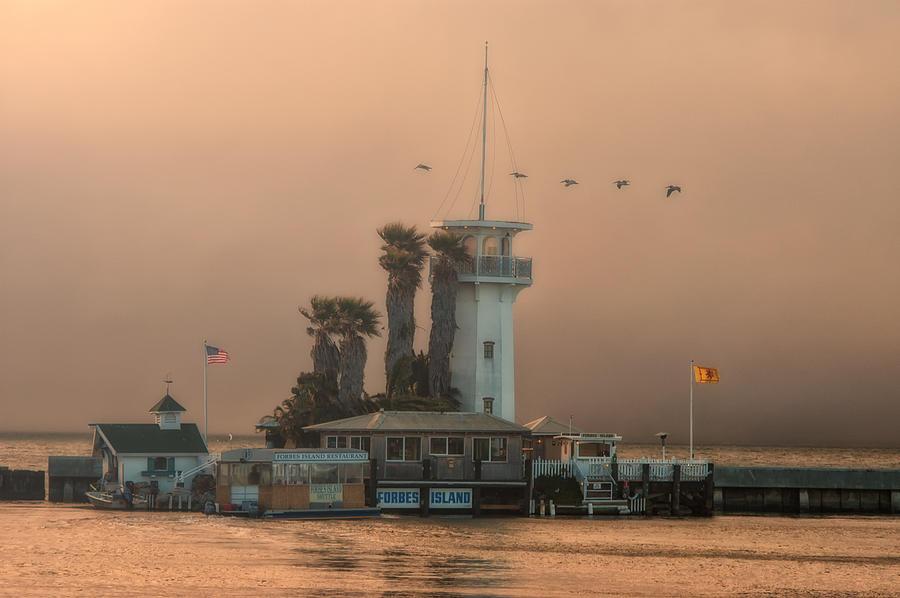 Pelicans Crossing at Forbes Island by Joe Ownbey