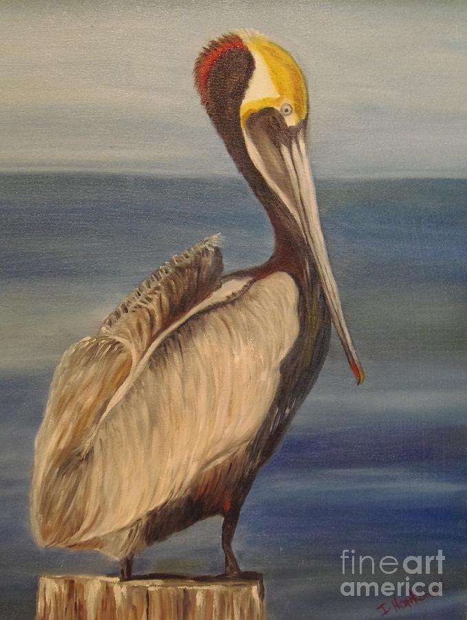 Bird Painting - Pelican by Isabel Honkonen