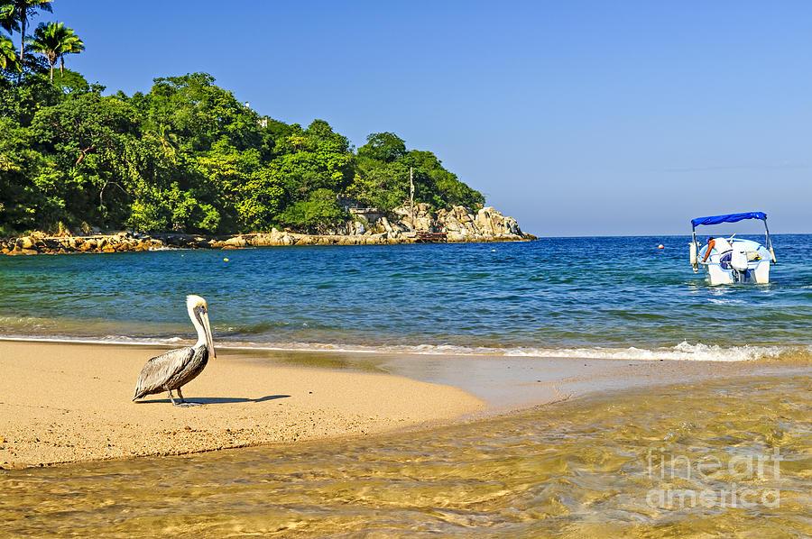 Pelican Photograph - Pelican On Beach by Elena Elisseeva
