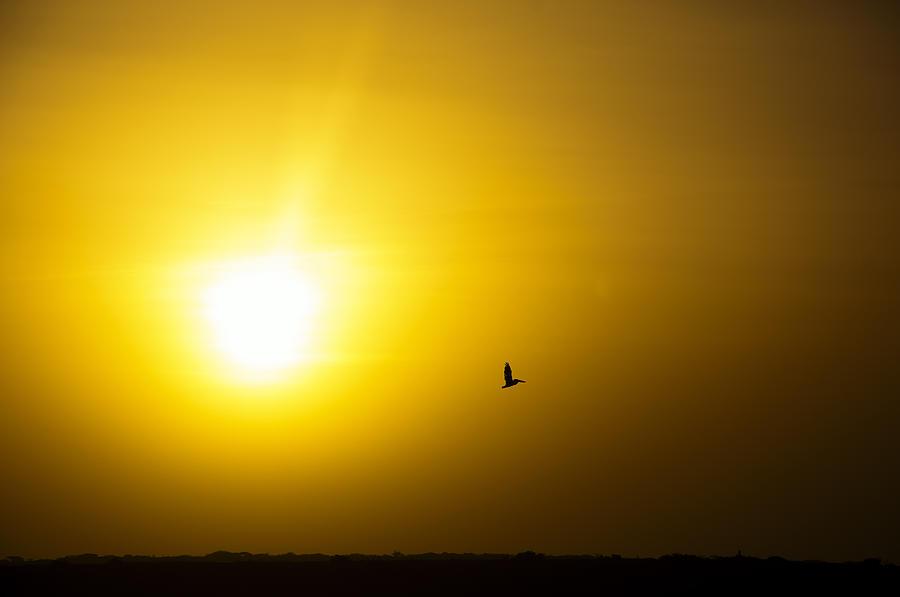 Sunrise Photograph - Pelican Silhouette by Jess Kraft
