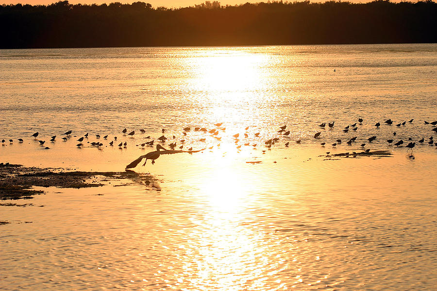 Pelican Photograph - Pelican Sunset by Mark Russell