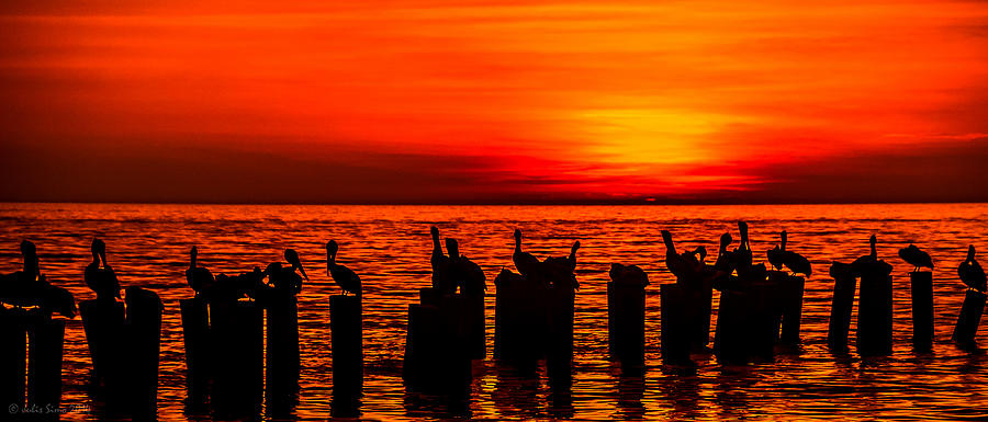 Pelicans At Sunset In Red And Yellow Photograph