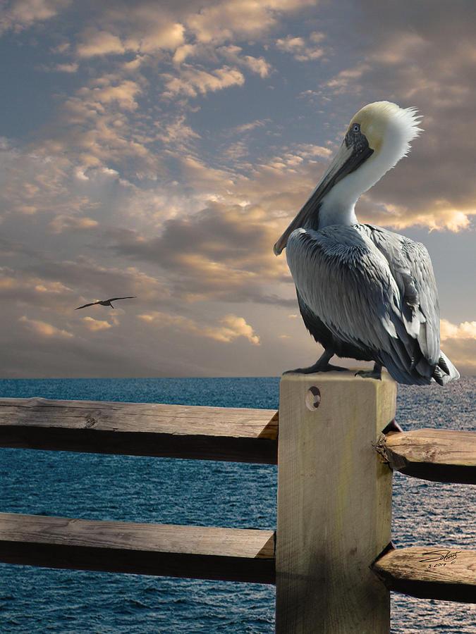 Pelican Digital Art - Pelicans Of Tampa Bay by M Spadecaller