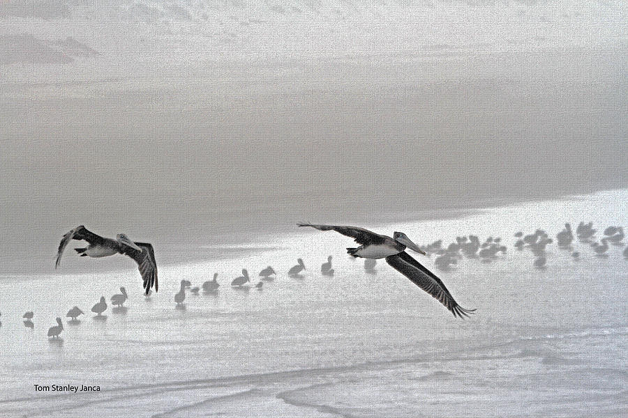 Pelicans Photograph - Pelicans Off For A Foggy Day Of Fishing by Tom Janca