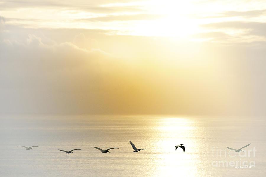 California Ocean Photograph - Pelicans Over Malibu Beach California by Artist and Photographer Laura Wrede