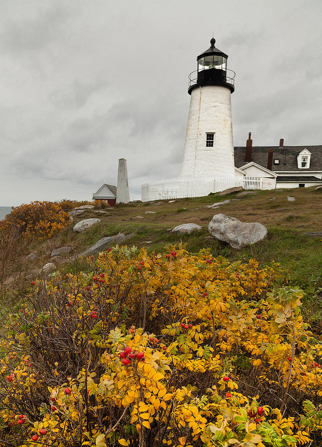 Pemaquid Point Lighthouse and Sea Roses by David Smith
