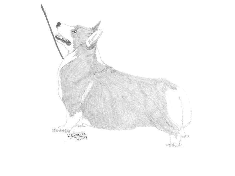 Pembroke Welsh Corgi Drawing By Virginia Cleary