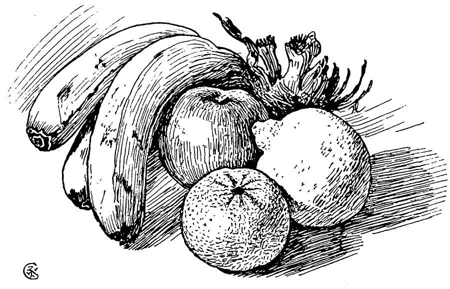 D Line Drawings Vegetables : Pen drawing of fruit by