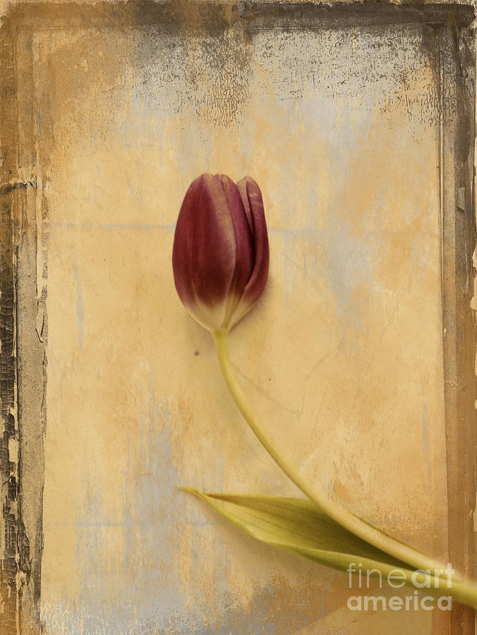 Tulip Photograph - Penchant Naturel 03bt03c by Variance Collections