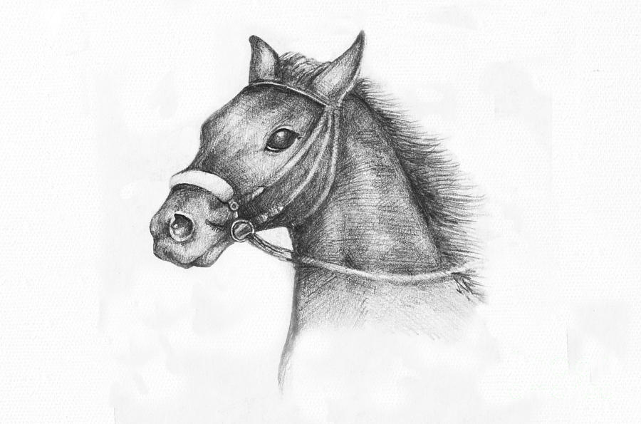 Animal Drawing - Pencil Drawing Of A Horse by Kiril Stanchev