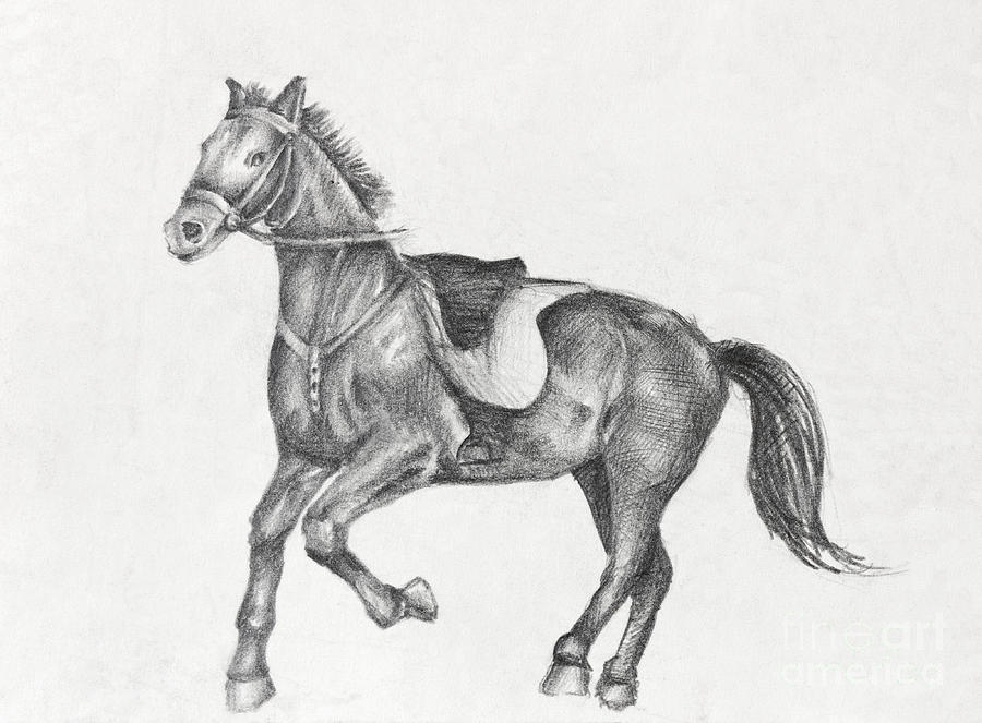 Run Drawing - Pencil Drawing Of A Running Horse by Kiril Stanchev
