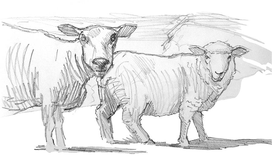 sheep drawing pencil drawing of two sheep by mike jory